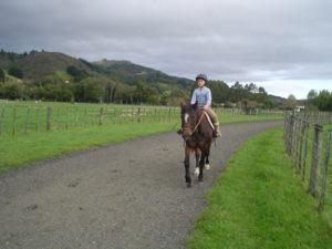 horsephoto23